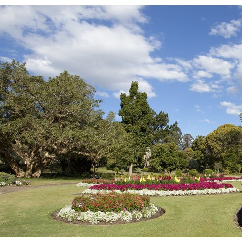 Brisbane City Park Crop